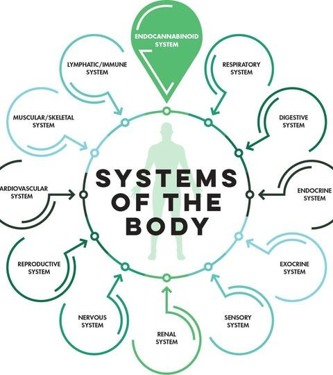 Systems of the Body and the ECS